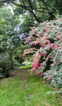 A woodland walk in Nugent's Wood