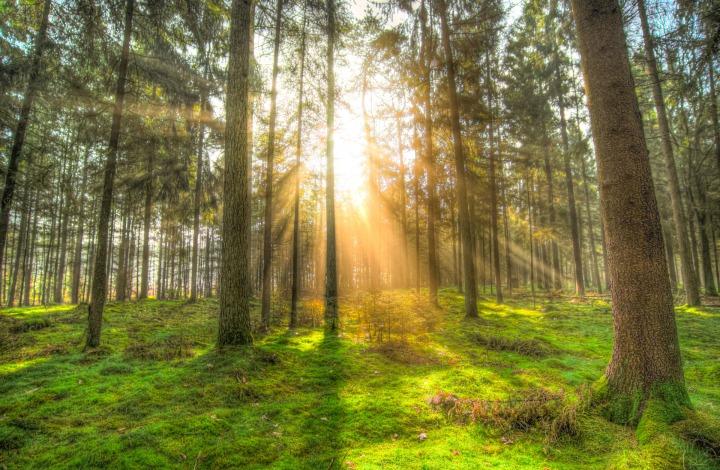 forest-2209221_1920.jpg